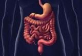 Эти простые советы помогут нормализовать работу кишечника