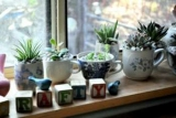 Украсьте квартиру комнатных растений: 8 интересных идей