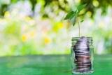 Это к деньгам: какие денежные растения растут в домашних условиях