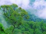 Предприимчивый китайский по продаже свежего воздуха получил 600 тысяч долларов